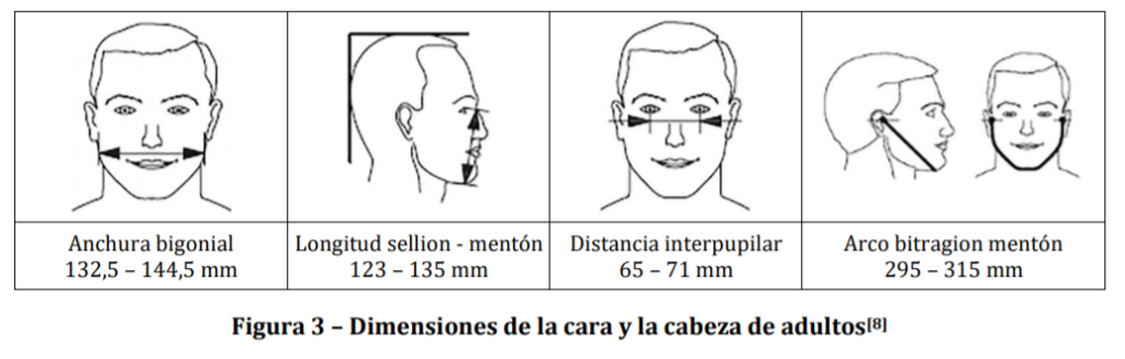 Dimensiones de la cara y la cabeza de adultos